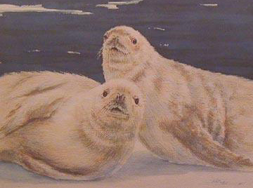 Crabeater Seals, from the Antarctica Collection
